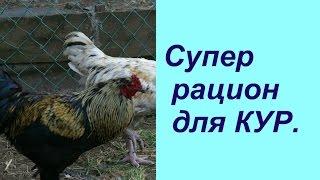 Супер рацион для КУР. | Feeding chickens.