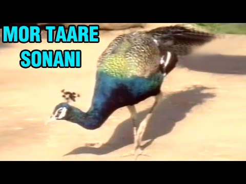 Mor Taare Sonani - Vevai Na Mandve - Wedding Songs - Gujarati Marriage Songs - Marriage Songs
