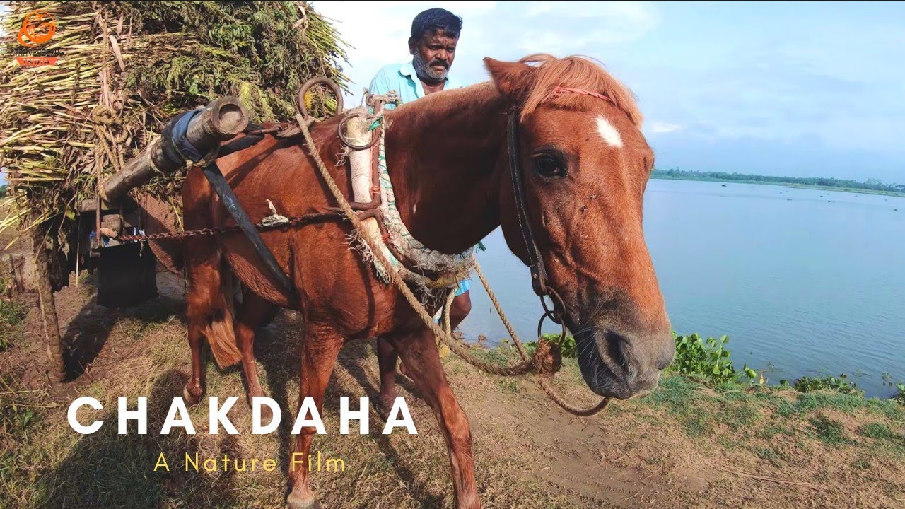 Chakdaha - A Nature Film by TraverseXP India | Cinematic Travel Video | Sony a6400