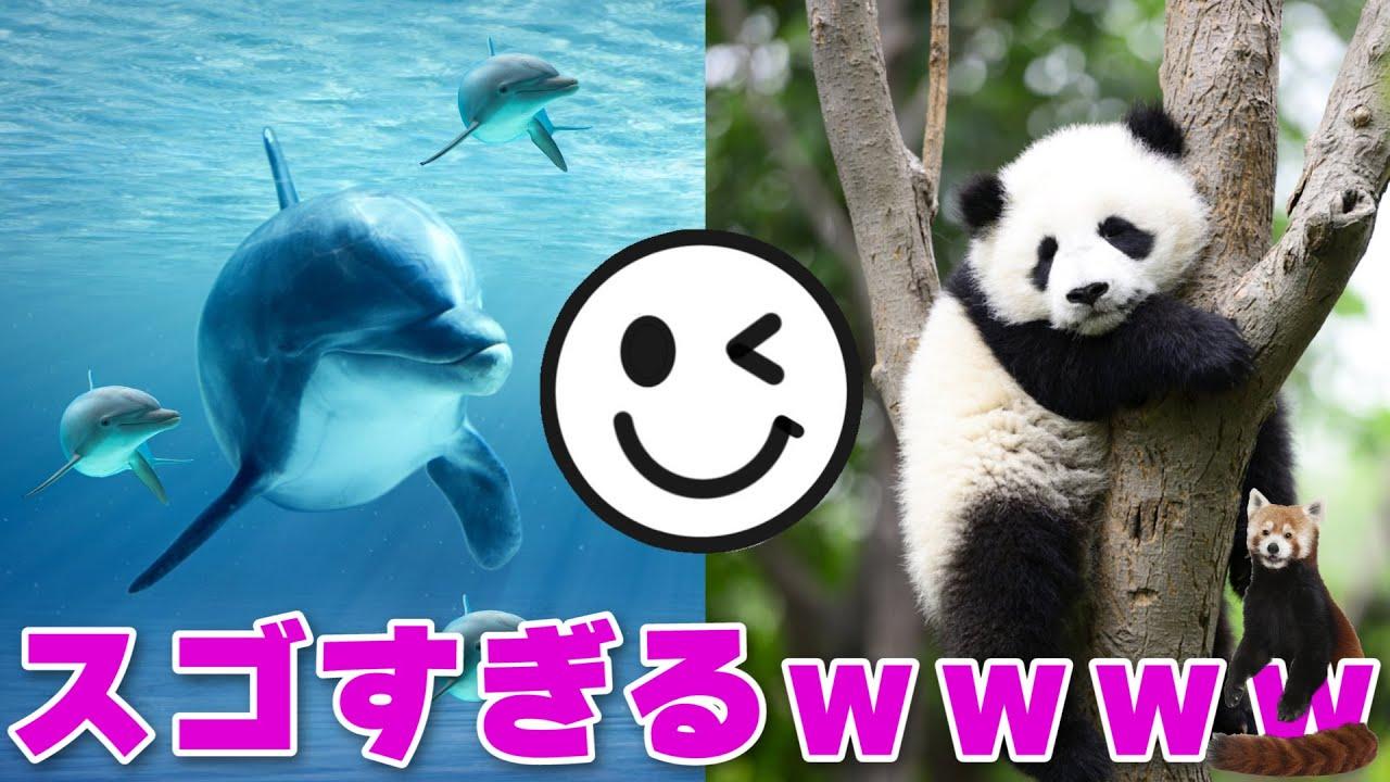 みんなに「動物園or水族館」アンケートとったら意外すぎる結果になったwww【ツッコミ】【アンケート】