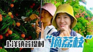 阿渔妹携手肥妹来到上洋镇菩提村,又大又新鲜的荔枝,你爱了吗?【阿渔妹】
