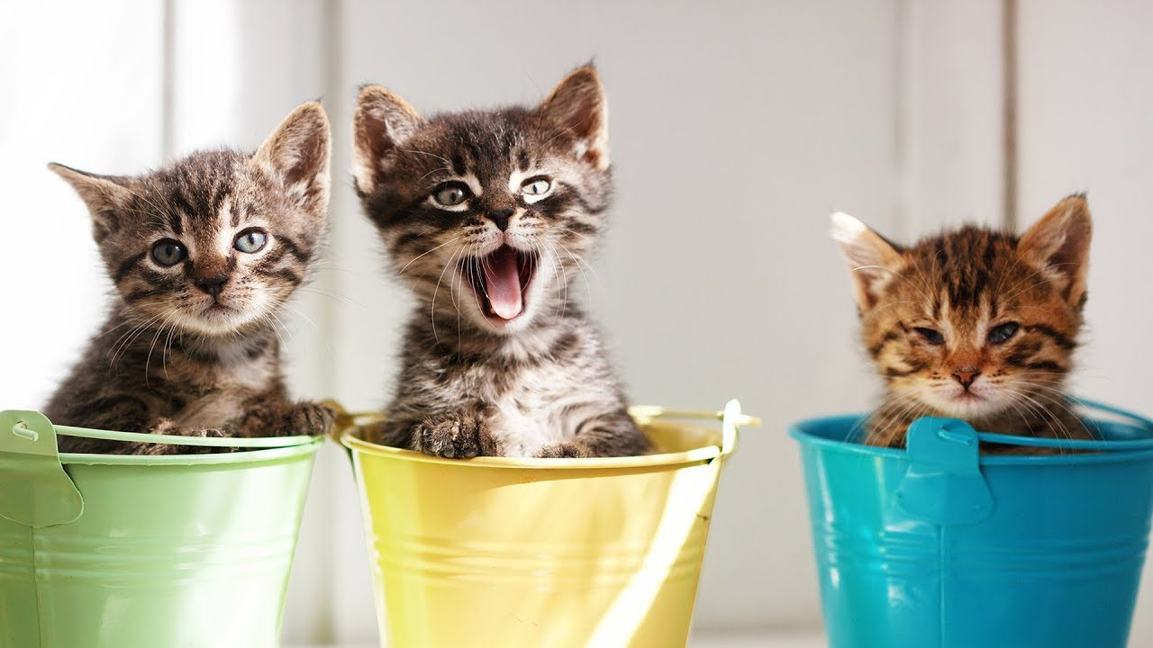 funniest and cutest kittens try not to say aww challenge youtube