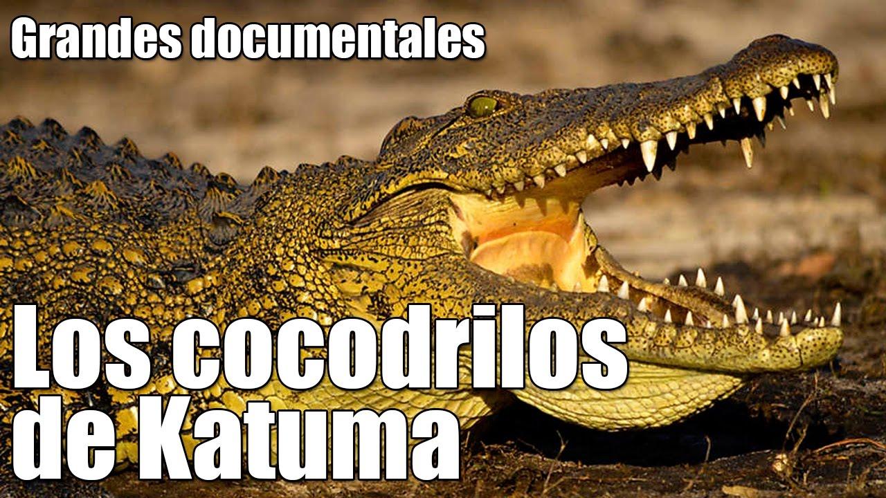 Grandes documentales - Los cocodrilos de Katuma [06/10/2016]
