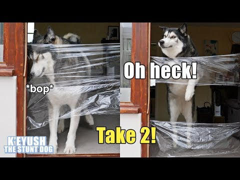 My Dog Reacts To Invisible Challenge LEVEL 2!