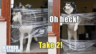 my-dog-reacts-to-invisible-challenge-level-2