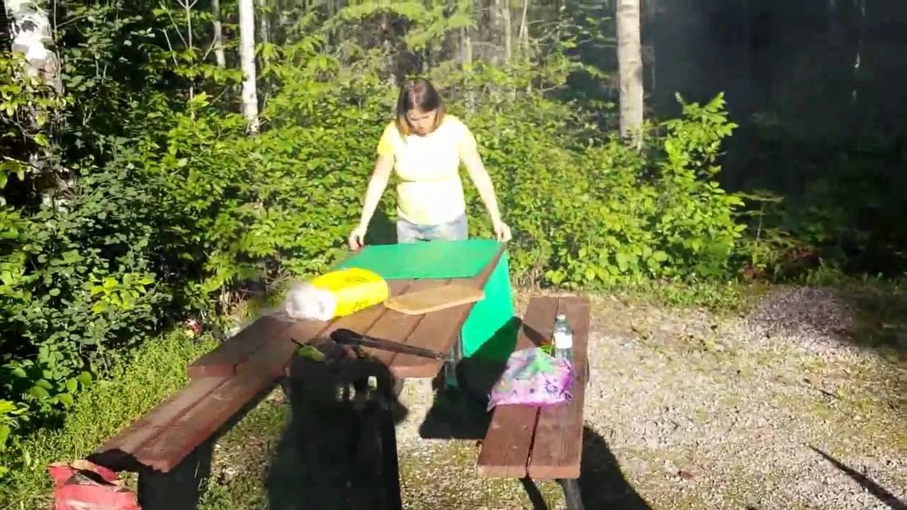 Best Campground For Dogs In Algonquin