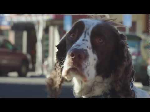 Pet Travel to Bend Oregon - Pet Friendly Information | Visit Bend