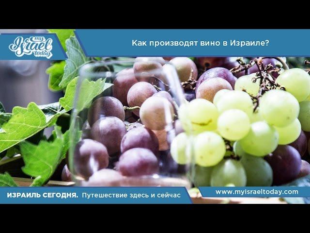 Видеоблог: Как производят вино в Израиле?