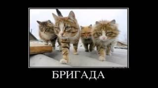 Котэ зажигают! Смешные фотографии-демотиваторы с котами, видео