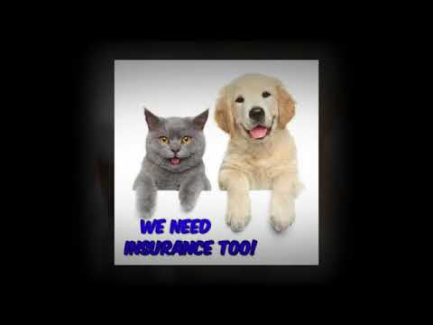 Do you have pet insurance for your pets?