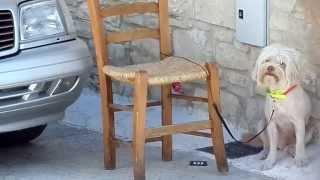 Собаке жарко на Кипре и она попросила её побрить )))))))