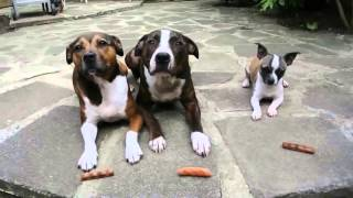 3 собаки и 3 сосиски