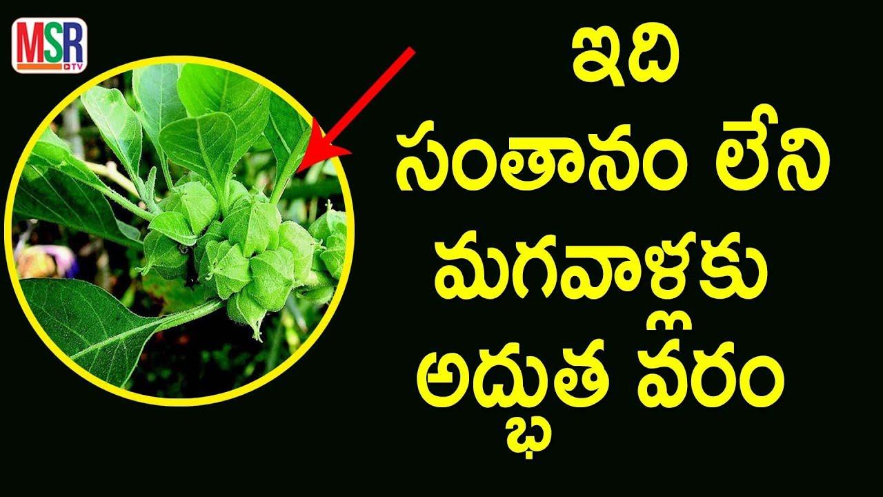 ashwagandha benefits in telugu pdf