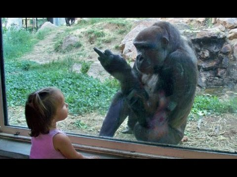 Thumbnail: Kids At The Zoo New Compilation 2016 - Funny Babies At The Zoo