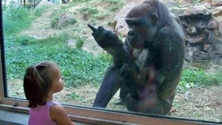 Most kids love animals and they often visit zoos and waiting to new...