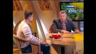 """Передача """"Диалоги о животных"""" про фенеков из нашего питомника"""