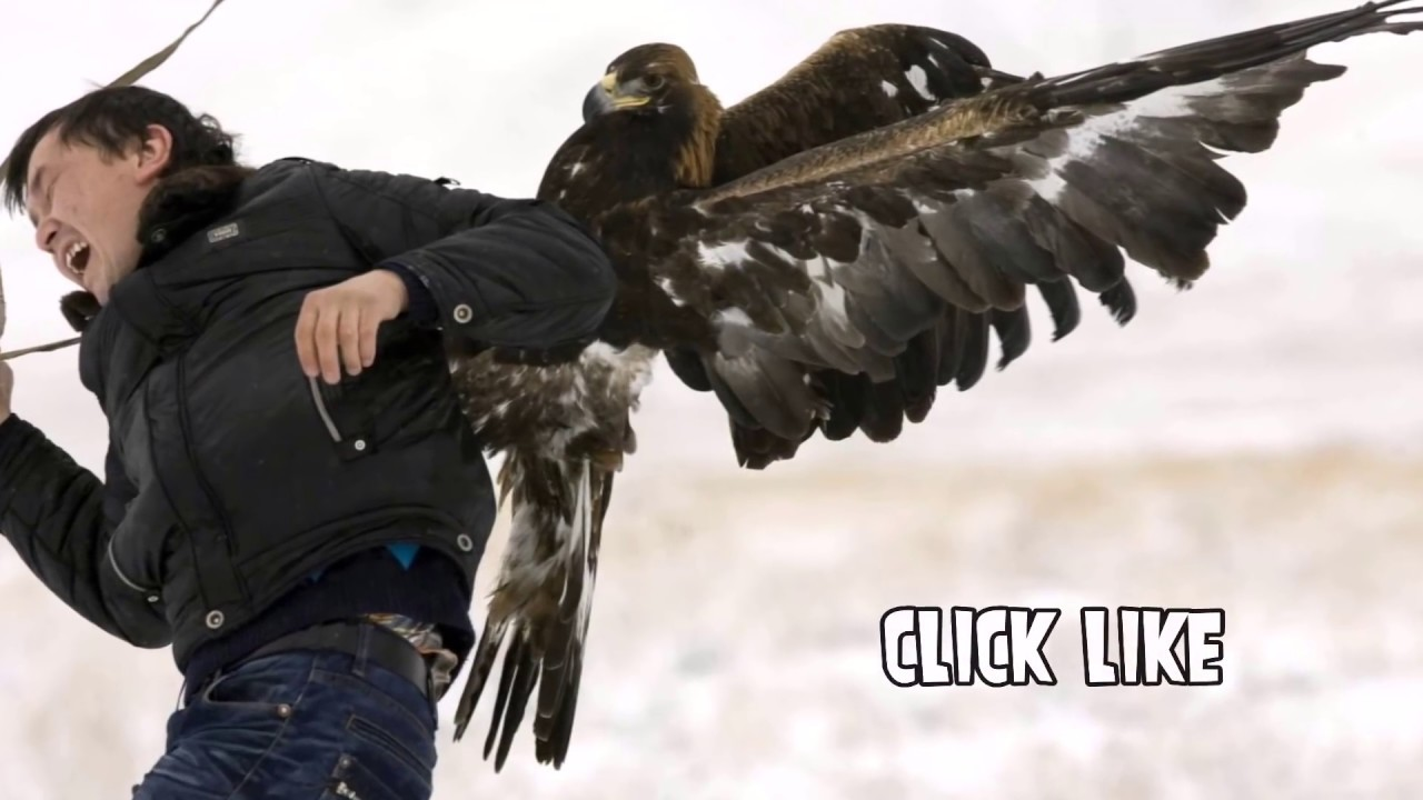 eagle attack - photo #31