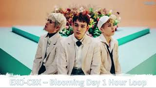 Download Video EXO-CBX - Blooming Day (1 HOUR LOOP) MP3 3GP MP4