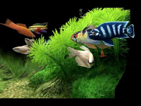 Dream Aquarium HD