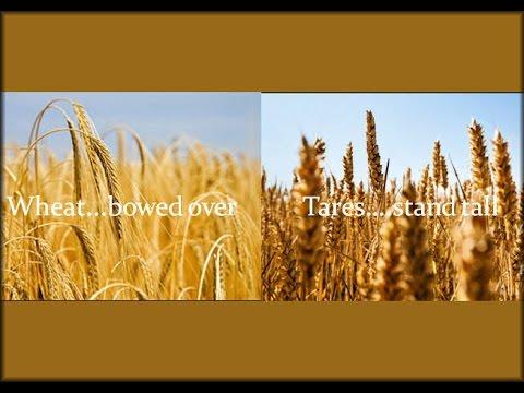 Esau and the Tares pt 3 - Brad Scott - YouTube