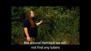 Dzikie rośliny jadalne - cz1. Świerząbek bulwiasty (Wild edible plants - pt1. Tuberous Chervil)