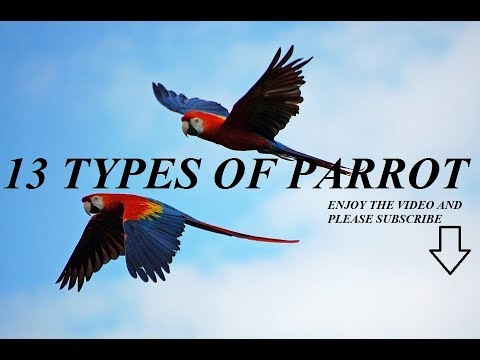 13 Types of Parrots