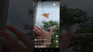 jump pet  animal video