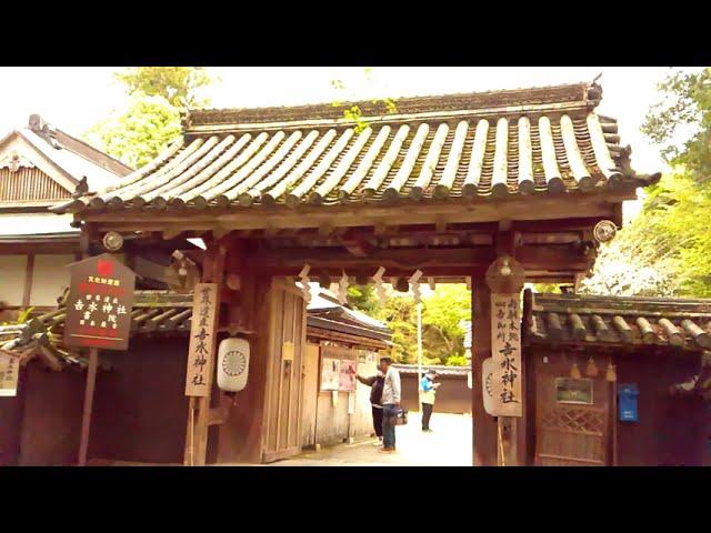 吉野1000本桜パワー&パワースポット【momo】