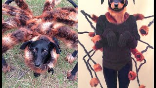 Mutant Spider Dog Costume DIY Tutorial