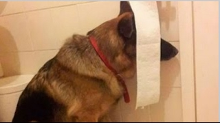 Funny And Cute Dogs Playing Hide And Seek Compilation   Funniest Dog Videos 2016
