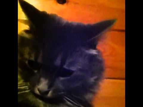 Cute Vine Cat