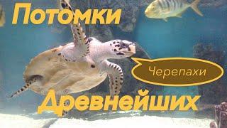 Черепахи. Потомки Древнейших. Animals & fish.