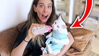 Ich behandle meine KATZE ALS BABY + Verkleidung für 24 Stunden