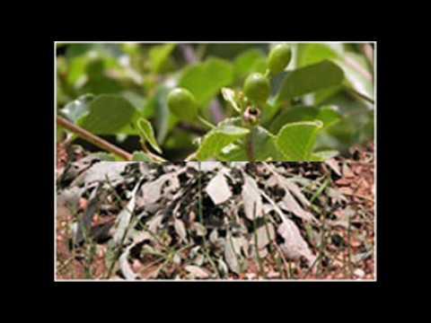 parque-natural-de-las-sierras-de-cazorla,-segura-y-las-villas:-flora-(1-de-3)
