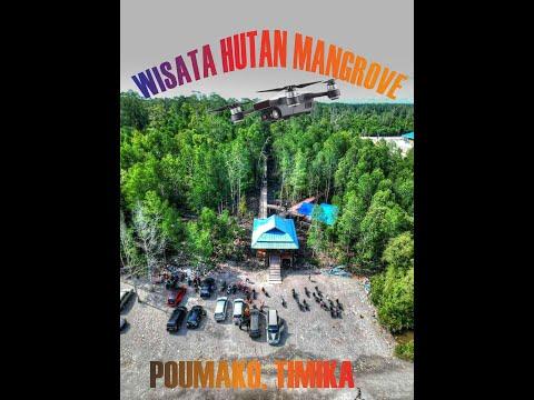 Wisata Hutan Mangrove (bakau) Di Pomako, Timika  *rekam Dari Drone*