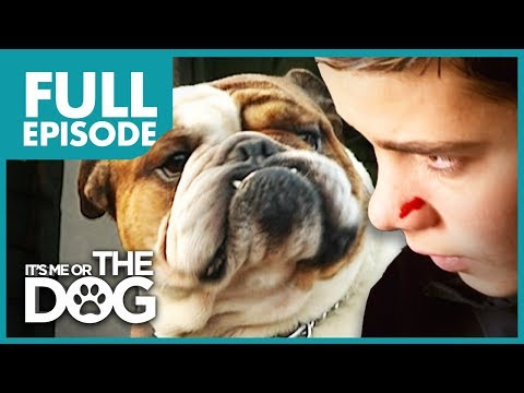 the-bully-bulldog:-pugsley-|-full-episode-|-it's-me-or-the-dog
