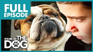 The Bully Bulldog: Pugsley | Full Episode | It's Me or The Dog