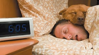 CUTE Dogs Sleeping With Owner | Top Funny Animal Videos
