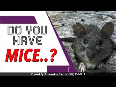 Get Rid Of Mice: Amazing Sale In La Costa CA! 619-319-9301