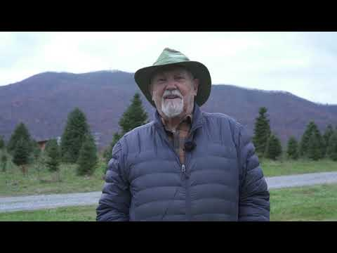 Radio Bristol Farm Report - Roan Valley Tree Farm