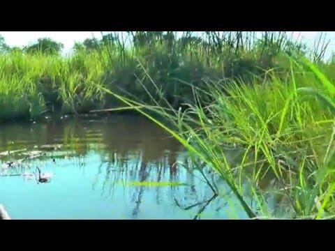 Hippo Danger in Mokoro in Botswana