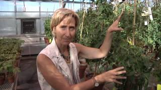 Improving Crops Through Epigenomics