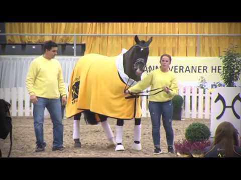 STAKKATO GOLD - www.gestuet-sprehe.de