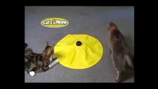 Cats Meow Toy | Cats Love Get Cats Meow Toy As Seen On Tv