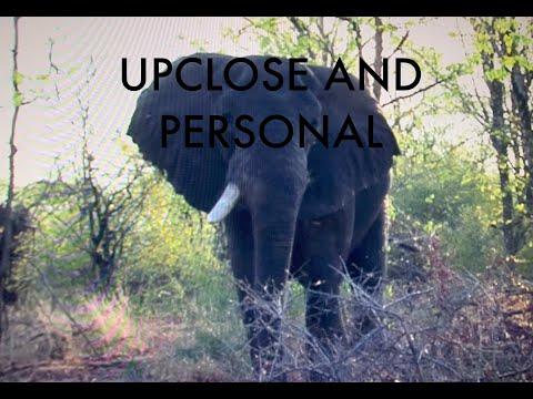 NEIL HUNTS ELEPHANT AT EXTREME CLOSE RANGE