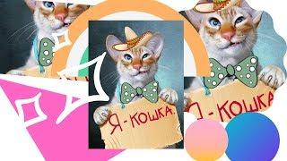 Новое смешное видео про животных 2019