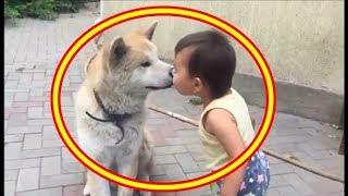 【海外の反応】「愛さずにはいられない」 秋田犬を見た外国人から大反響の嵐『今まで飼っていた犬の中で最高にワンダフルで、一番の友人だよ』【すごい日本】【再UP】 thumbnail