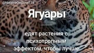 Всё только о животных