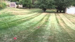 Cairn Terrier Lure Coursing