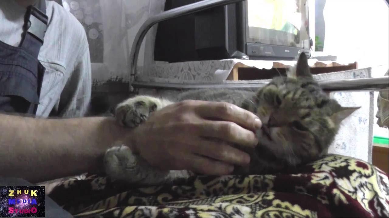 Кот рукомойник